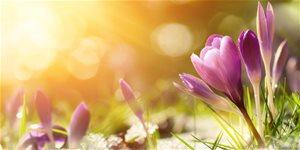 https://cdn.alza.sk/Foto/ImgGalery/Image/Article/brezen-na-zahrade.jpg