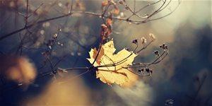 https://cdn.alza.sk/Foto/ImgGalery/Image/Article/listopad-na-zahrade_2.jpg
