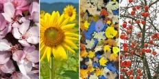 https://cdn.alza.sk/Foto/ImgGalery/Image/Article/zahradni-kalendar-nahled.jpg