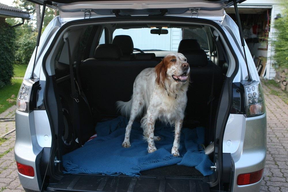 Pes může cestovat například v kufru auta.