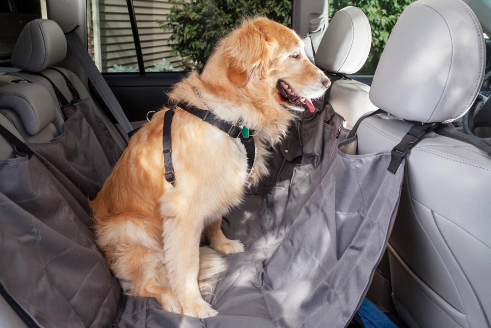 Základem cesty se psem je bezpečnost psa i ostatních pasažérů.