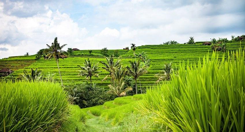 Tipy a rady na dovolenku na Bali  db244f1af03