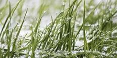 https://cdn.alza.sk/Foto/ImgGalery/Image/zahradni-kalendar-unor-nahled.jpg