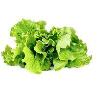 Click and Grow Hlávkový šalát - Sadenice