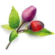 Click and Grow Fialové chilli - Sadenice