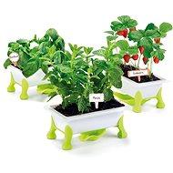 Experimentálna súprava Educa Moja malá záhradka – jahody, mäta, bazalka