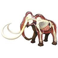 4D Mamut - Anatomický model