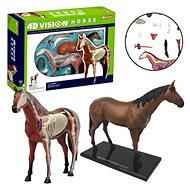 4D Kôň - Anatomický model
