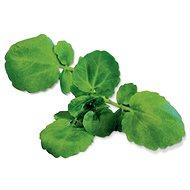 Plantui Watercress - Kapsuly