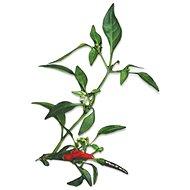 Plantui Chili Demon Red - Kapsuly