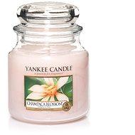 YANKEE CANDLE Classic stredná 411 g Champaca Blossom - Sviečka