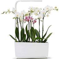 TREGREN T6 Kitchen Garden, biely - šikovný kvetináč