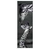 Dino Žirafy panoramatické - Puzzle