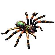 4D Tarantula - Anatomický model